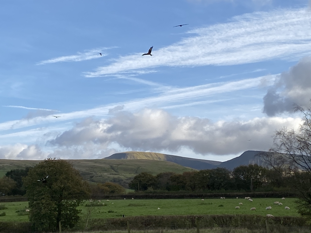 Stunning scenes of Red Kites and Llyn Y Fan Fach